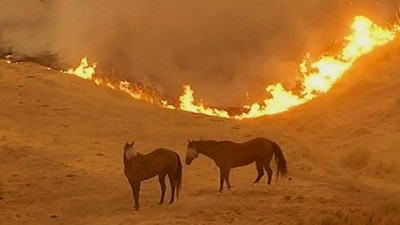 Horses in Valley Fires