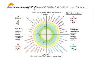 Zoe Horsenality Chart