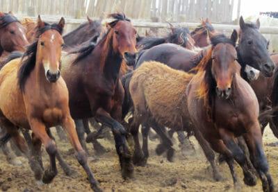 Hallelujah Horses
