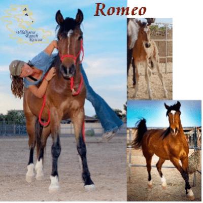 Romeo, Ashley, Wildhorse