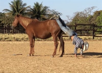 Horses for Orphans