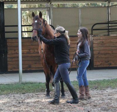 Heartland Horses