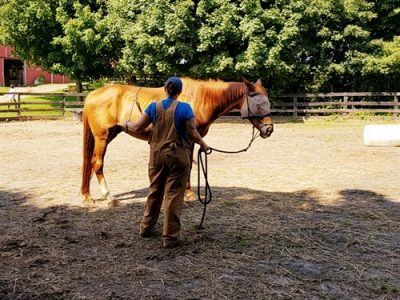Maryland Horse Rescue