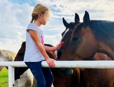 WindyHill Equine Rescue and Rehoming