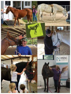 Horse Welfare Poster