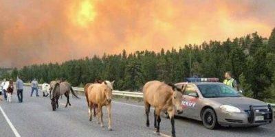 Horses at Risk